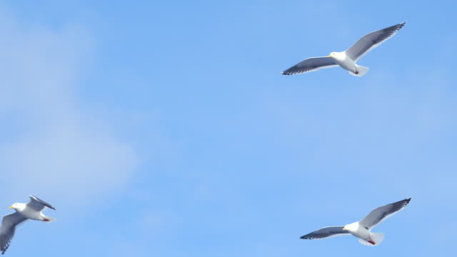 group of seagulls flying - hovering stock videos & royalty-free footage