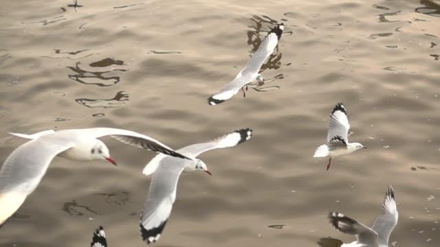 Group of seagulls on sea