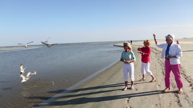 MS TD Group of senior women feeding seagulls at beach / St. Simon's Island, Georgia, United States