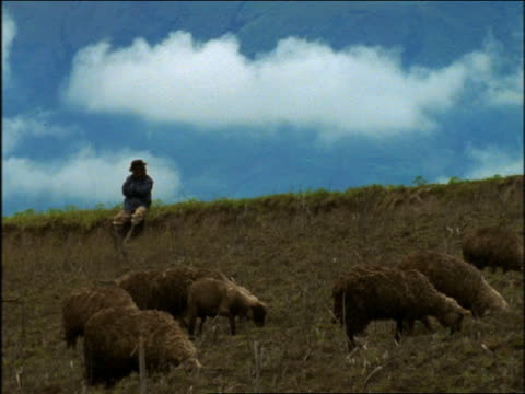 group of sheep grazing as shepherd sits in background / otavalo, ecuador - medium group of animals stock videos & royalty-free footage
