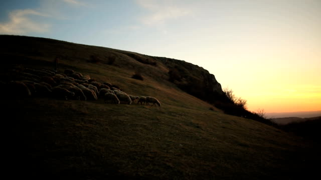 group of sheep s with woman shepherd grazing on the mountain in the dusk - christianity stock videos & royalty-free footage