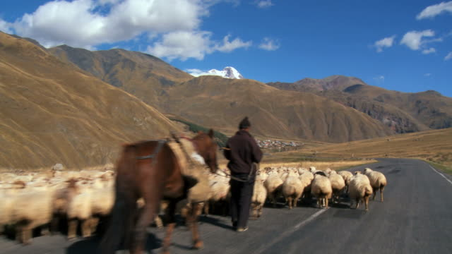 ms ts group of sheeps walking on highway / georgia  - caucasus stock videos and b-roll footage