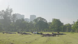 Group of six people mixed age people making yoga pose call Cobra Pose in public park in city for fitness, sport, yoga and healthy lifestyle concept