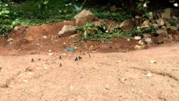 Group of  slow-motion butterfly flying