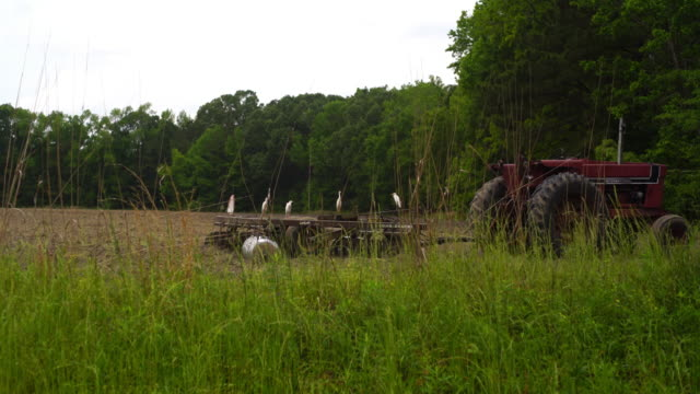 vídeos y material grabado en eventos de stock de grupo de pequeñas blanco garzas en el tractor en el campo de la granja - carolina del sur