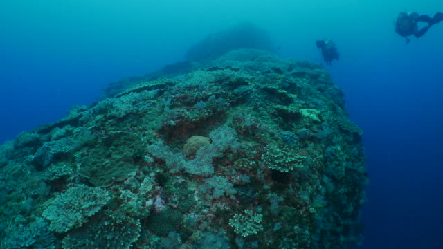 group of soft and hard coral colony at undersea mountain in japan - soft coral stock videos & royalty-free footage