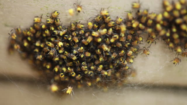 group of spiders on top of each other, close up - abundance stock videos & royalty-free footage