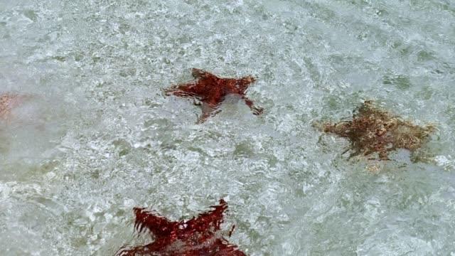 カリブ海の島のカイのヒトデのグループ。ロス・ロケス(ベネズエラ) - ヒトデ点の映像素材/bロール