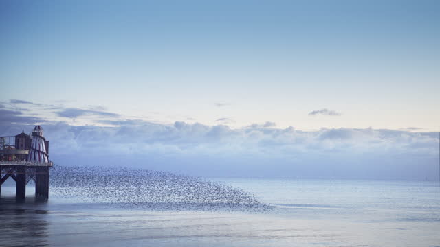 group of starlings flying low over the sea ready to roost for the night - brighton england stock videos & royalty-free footage