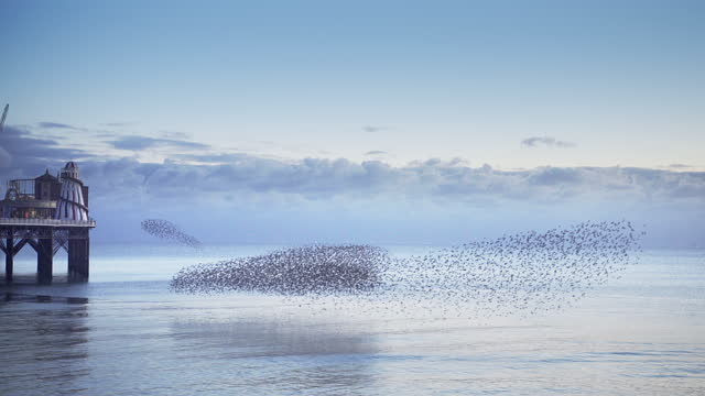 group of starlings group together making patterns over the sea - ムクドリ点の映像素材/bロール