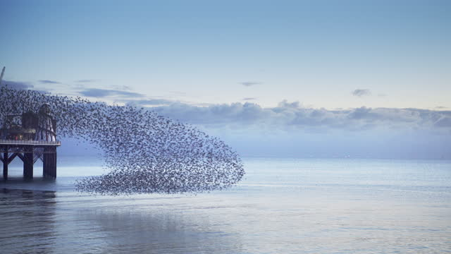 group of starlings making a wave pattern over a calm sea - large group of animals stock videos & royalty-free footage