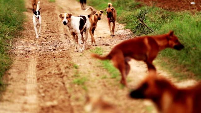 Group of stray dogs in the nature