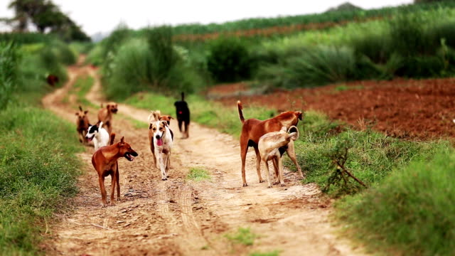 Group of stray dogs