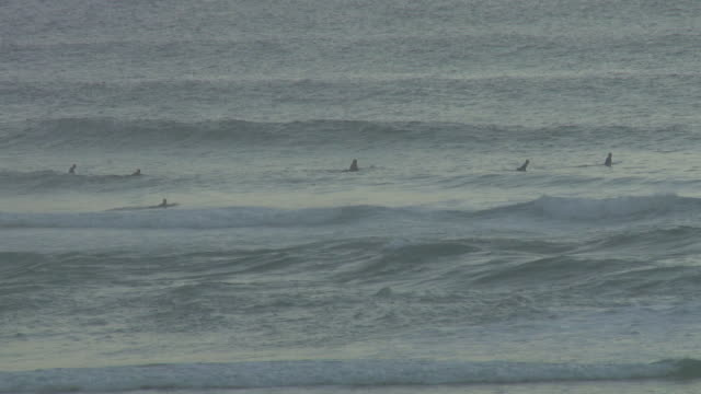 MS Group of surfers in Atlantic ocean / Cap de l'Homy, Aquitaine, France