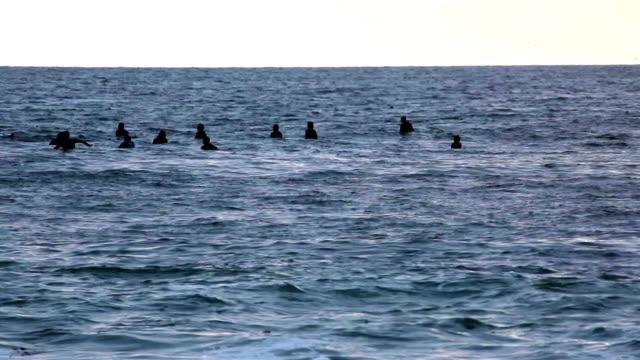 vídeos y material grabado en eventos de stock de ws group of swimmers in open sea, laguna beach, california, usa - laguna beach california