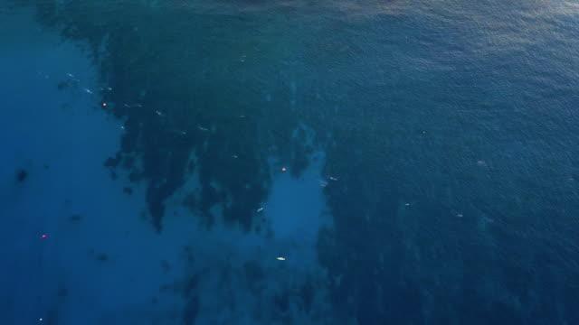group of swimmers racing ironman triathlon distance, kailua-kona, hawaii. usa - big island hawaii islands stock videos & royalty-free footage