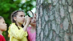 Group of three curious kids with magnifying glass examining insects on tree bark in park, medium tracking shot