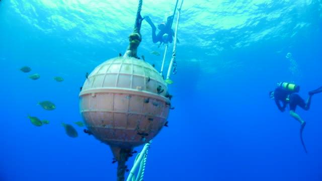 vídeos de stock e filmes b-roll de group of tiny sea fish hiding in anchor rope - ancora