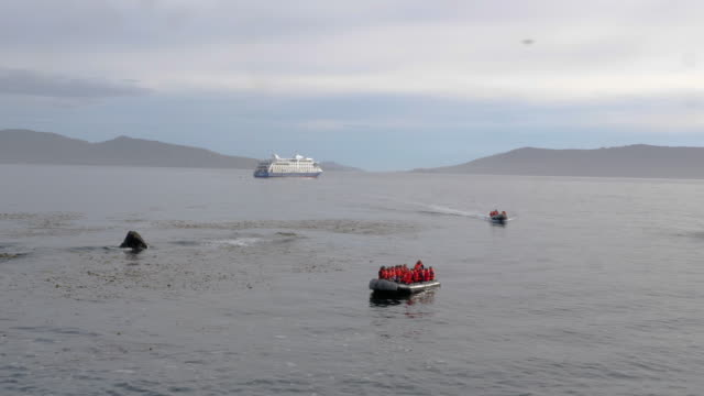vídeos de stock, filmes e b-roll de group of tourists arriving to cape horn island in a luxury cruise ship during summer - passear sem destino