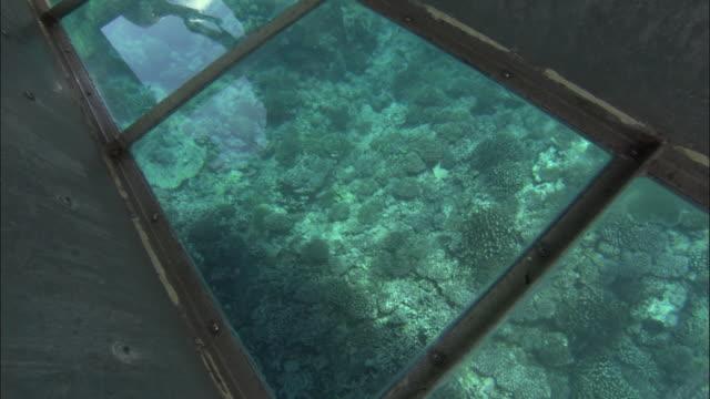 vídeos de stock e filmes b-roll de cu tu td group of tourists in glass bottomed boat, corals seen through glass / tuamotu, french polynesia - territórios ultramarinos franceses