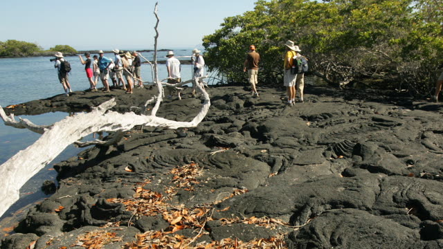 T/L ZO WS Group of tourists on lava rocks, Punta Espinosa, Galapagos Islands, Ecuador