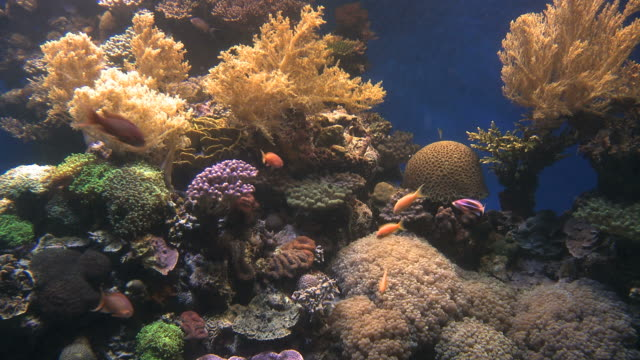 ms group of tropical fish swimming in aquarium with coral reef at marine center / eilat, arava, negev desert, israel  - 水族館点の映像素材/bロール
