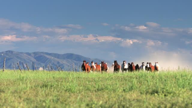 group of unbroken horses galloping towards camera - attività equestre ricreativa video stock e b–roll