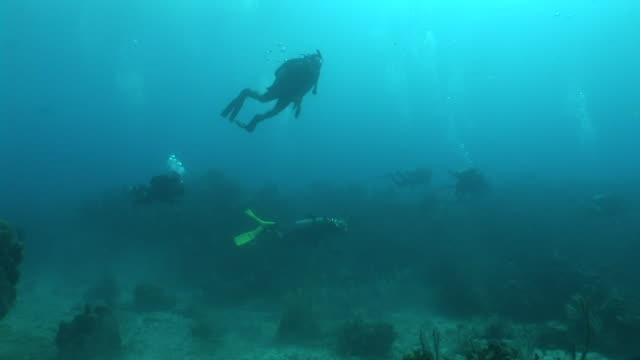 stockvideo's en b-roll-footage met group of unidentifiable scuba divers swimming in murky blue water most just above coral reef one diver in lighter colored waters above others turning... - zwemvlies