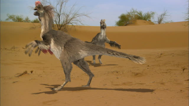 CGI, MS, PAN, Group of Velociraptors on sand dune