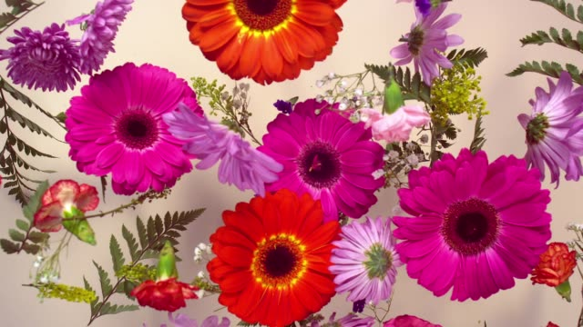 a group of vivid colored flower heads bouncing and splattering on beige background - bouquet video stock e b–roll