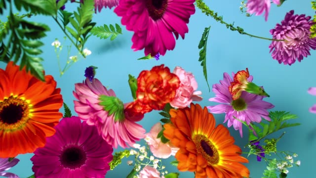 stockvideo's en b-roll-footage met a group of vivid colored flower heads bouncing and splattering on blue background - bloemblaadje