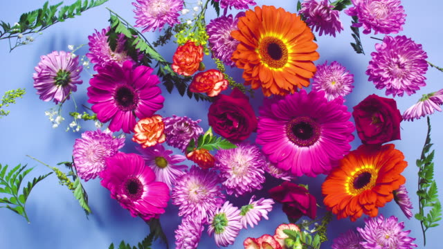 a group of vivid colored flower heads bouncing and splattering on blue background - bouquet video stock e b–roll