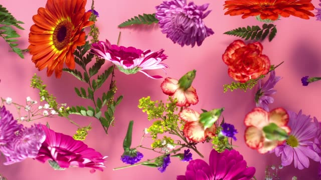 a group of vivid colored flower heads bouncing and splattering on pink background - carnation flower stock videos & royalty-free footage