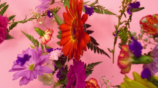 stockvideo's en b-roll-footage met a group of vivid colored flower heads bouncing and splattering on pink background - bloemblaadje