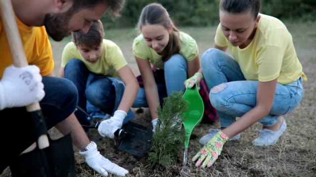 group of volunteers in the park planting seedlings - volunteer stock videos & royalty-free footage