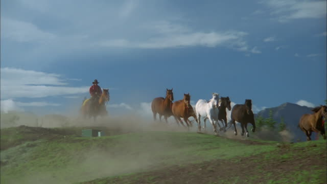 Group of wild horses gallop ahead of mounted cowboys and cowgirls while riding along plains, Telluride, Colorado Available in HD.