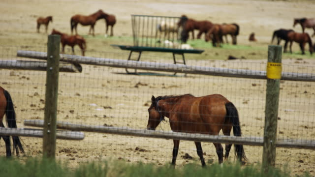 group of wild horses on ranch - animal pen stock videos & royalty-free footage