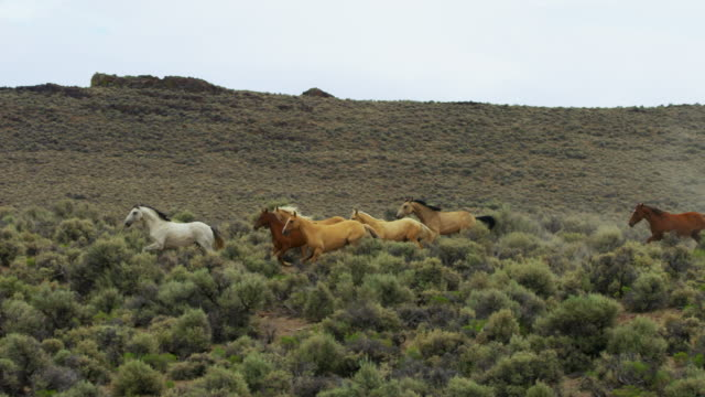 group of wild horses running - medium group of animals stock videos & royalty-free footage