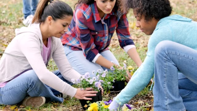 Group of women plant flowers in their community park