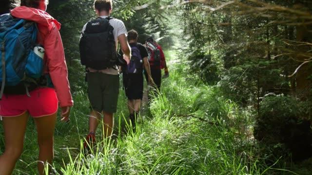 Gruppen av unga vandrare promenad ENFILIG ner skogsstig