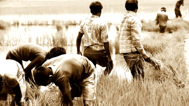group of young indian farmer working in the field - people in a row stock videos & royalty-free footage