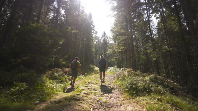 group of young teens hiking along a forest path - baumbestand stock-videos und b-roll-filmmaterial