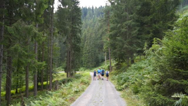 vídeos y material grabado en eventos de stock de group of young teens hiking in the woods from behind - 20 24 años