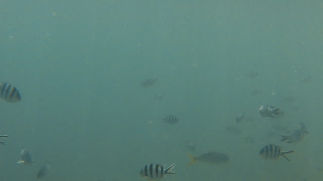 Group of zebra skin fish underwater