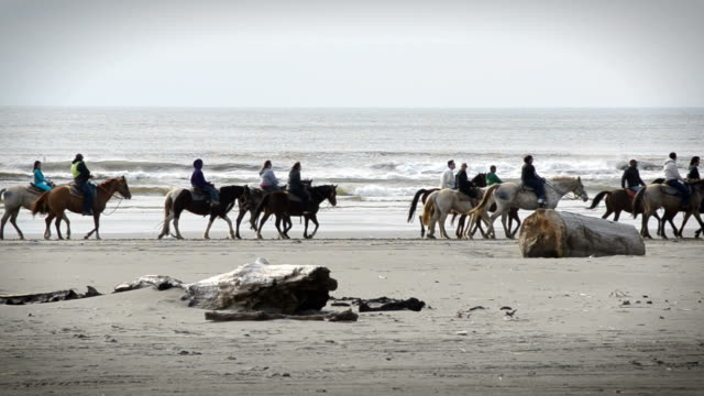 Group Riding Horses Along The Beach