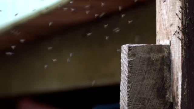 小さな蚊が昆虫飛行のグループの群れ - 虫の群れ点の映像素材/bロール