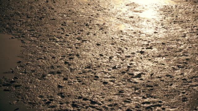 vídeos y material grabado en eventos de stock de grupos de mudskipper caminando a casa al atardecer - molusco