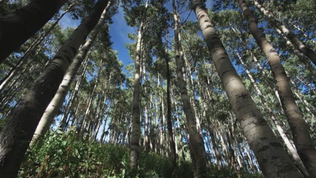vídeos y material grabado en eventos de stock de grove of trees - brighton ski area