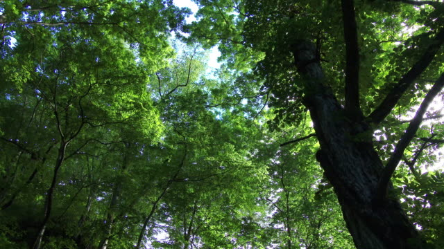 grow thick trees in dolly motion - aomori prefecture stock videos & royalty-free footage