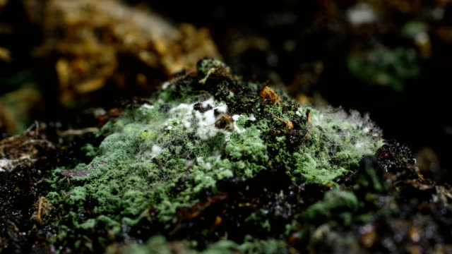 Growing fungi in time lapse video